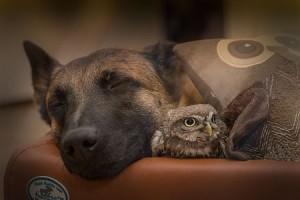 Anrührens sind besonders die Bilder, die eine vertrauensvolle Nähe zwischen so unterschiedlichen Tieren zeigen - der Verlag ha tmir das Foto freundlicherweise zur Verfügung gestellt