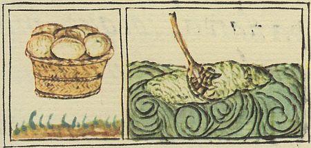 Codex Florentina Insekteneier Algen Jungesbcuh für die Stadt Köln Alles lecker