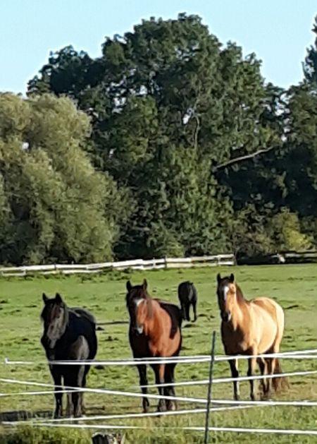 Drei Pferde, drei Farben
