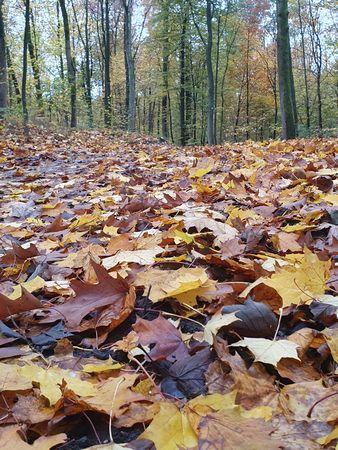 Foto Heike Baller Herbstlaub auf einem Waldweg