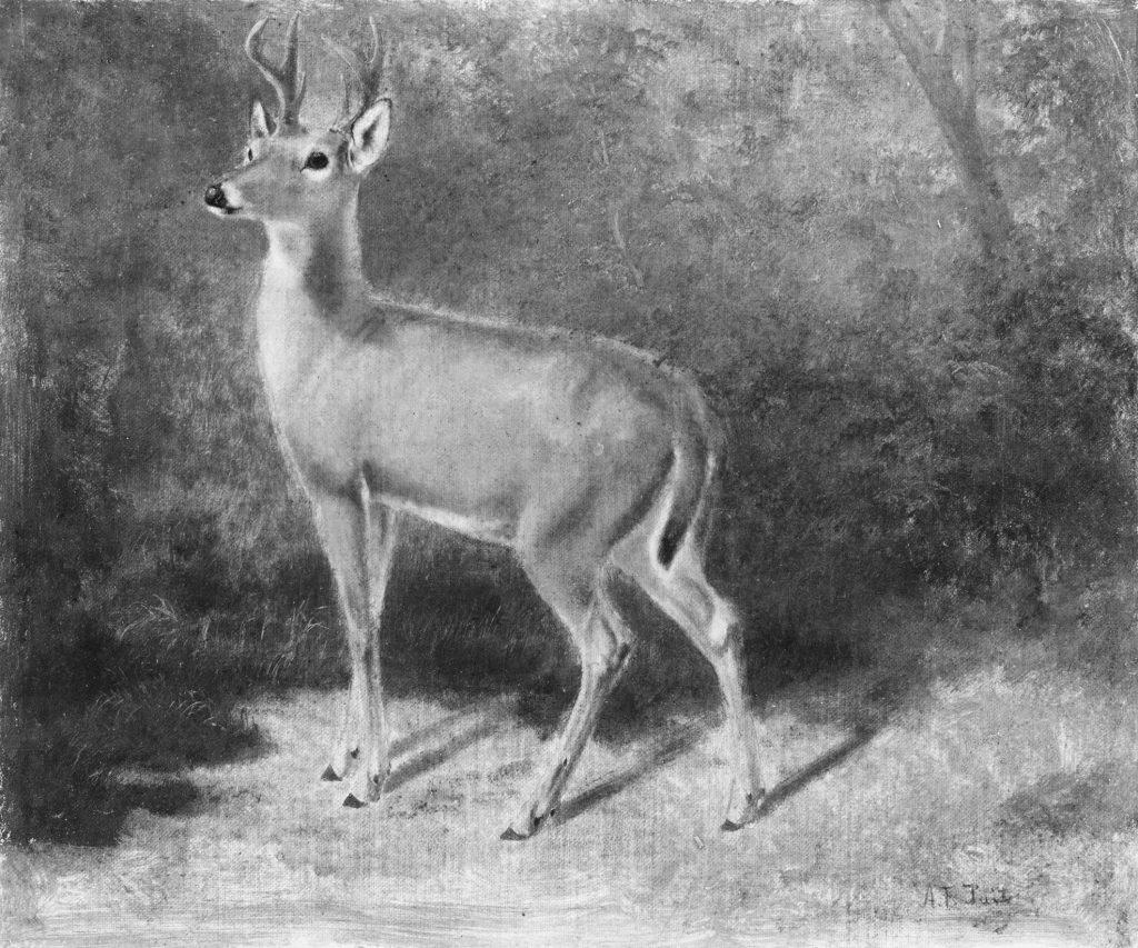 Bild eines Hirschs in schwarz-weiß aus dem Metropolitan Museum of Art, New York zu Sina trinkawladers Buch über Heimat muss mann selber machen