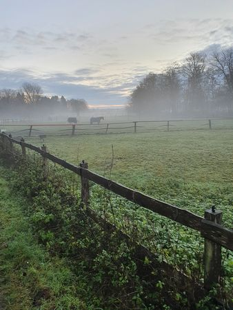 Blick über Pferdekoppel mit Pferden und Nebel und Morgensonne