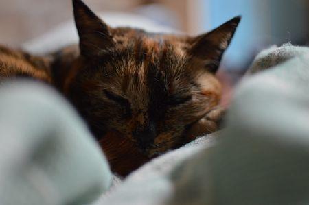Schlafende Katze zwischen zwei Kissen für den Roman von Kerstin Campbell