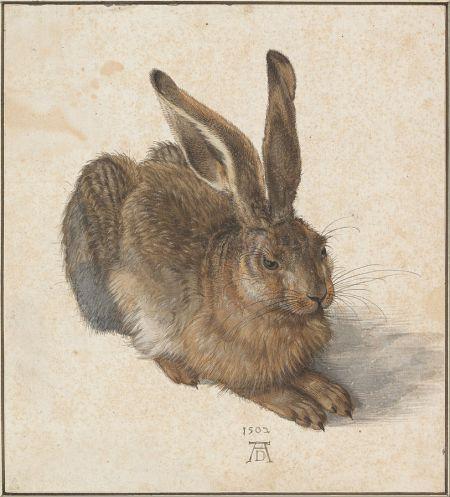 Feldhase von Albrecht Dürer, sehr detailgetreu